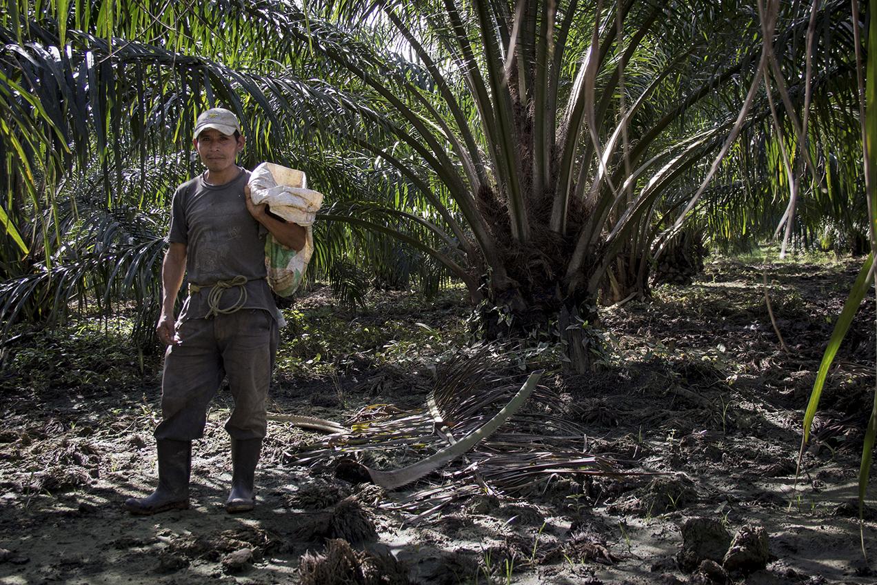 Un trabajador descansa después de recoger palma en la periferia de la planta extractora de aceite en Fray Bartolomé de las Casas, Alta Verapaz.