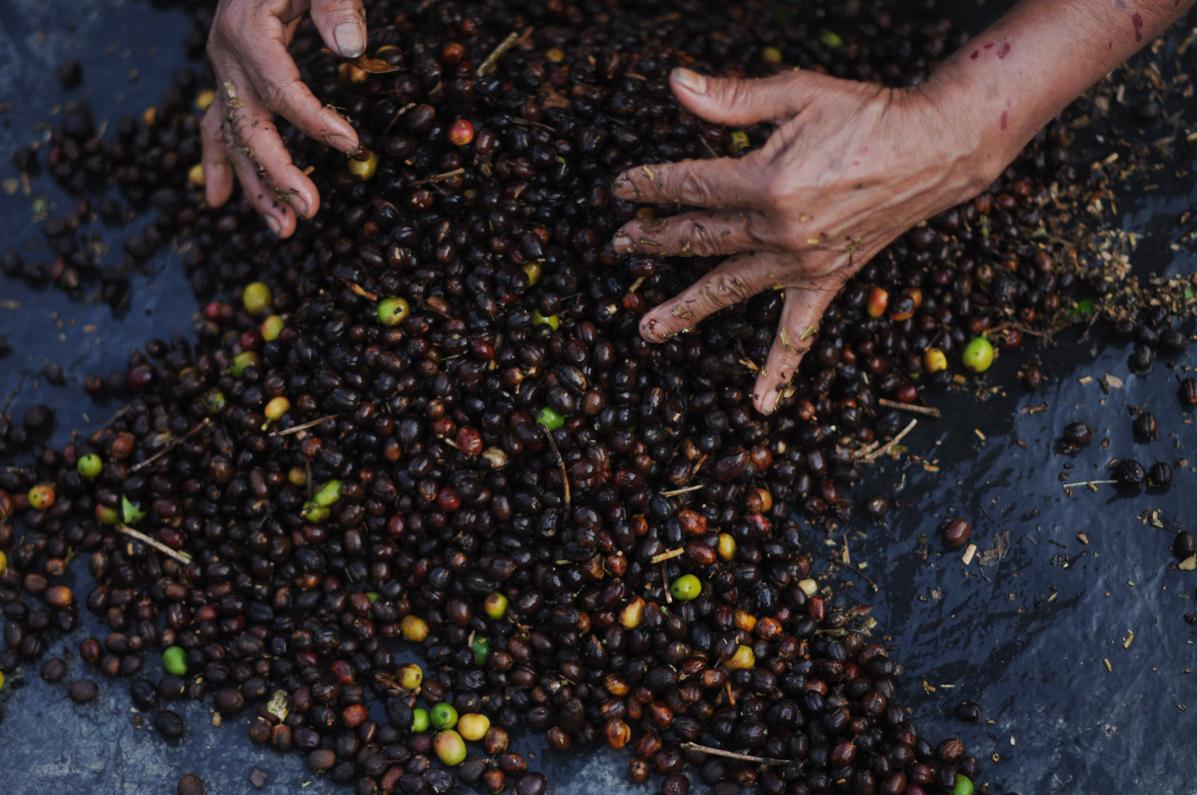 El fruto maduro. Foto de Sandra Sebastián