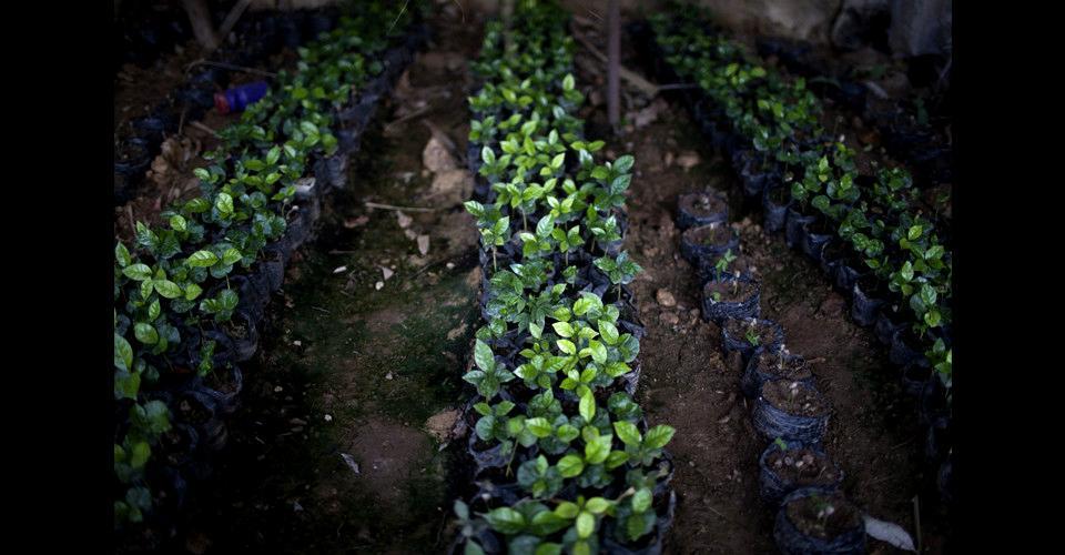 La venta de pilones de café es parte de la actividad económica que sustenta la familia de Armando Interiano Nájera