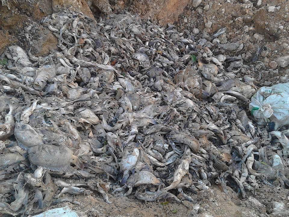 Miles de peces muertos aparecieron sobre el río La Pasión, entre abril y mayo de 2015.