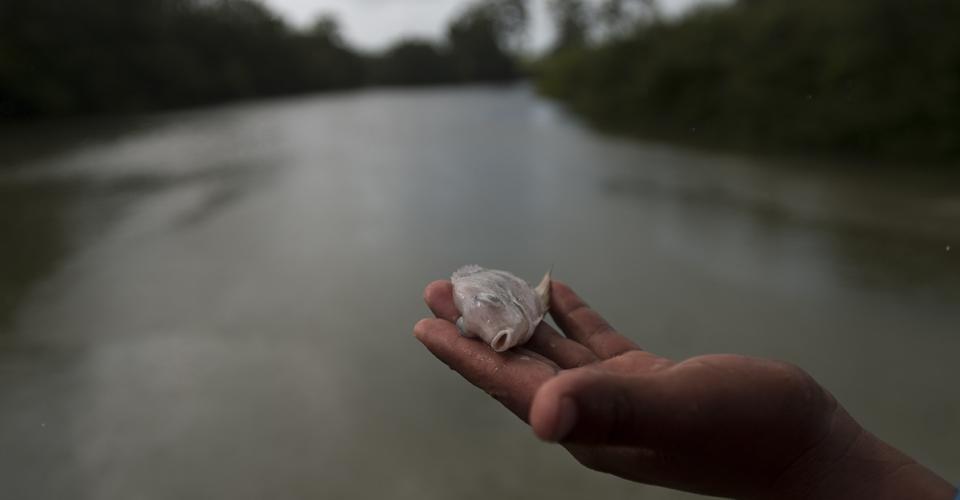 Repsa, principal sospechosa del ecocidio en el río La Pasión, no cerró sus puertas y siguió operando. Sin embargo, el Ministerio Público asegura tener avances en las investigaciones.