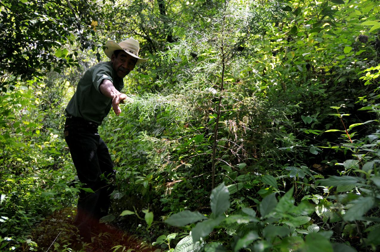 Luego de la búsqueda, Don Lorenzo encontró únicamente dos árbolitos.