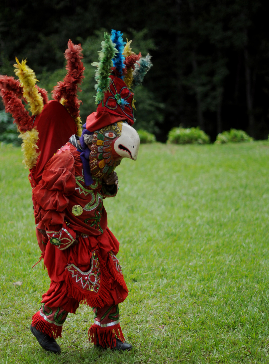 La guacamaya danza | Plaza Pública