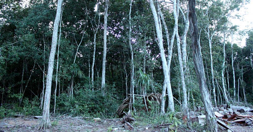 Área de explotación forestal