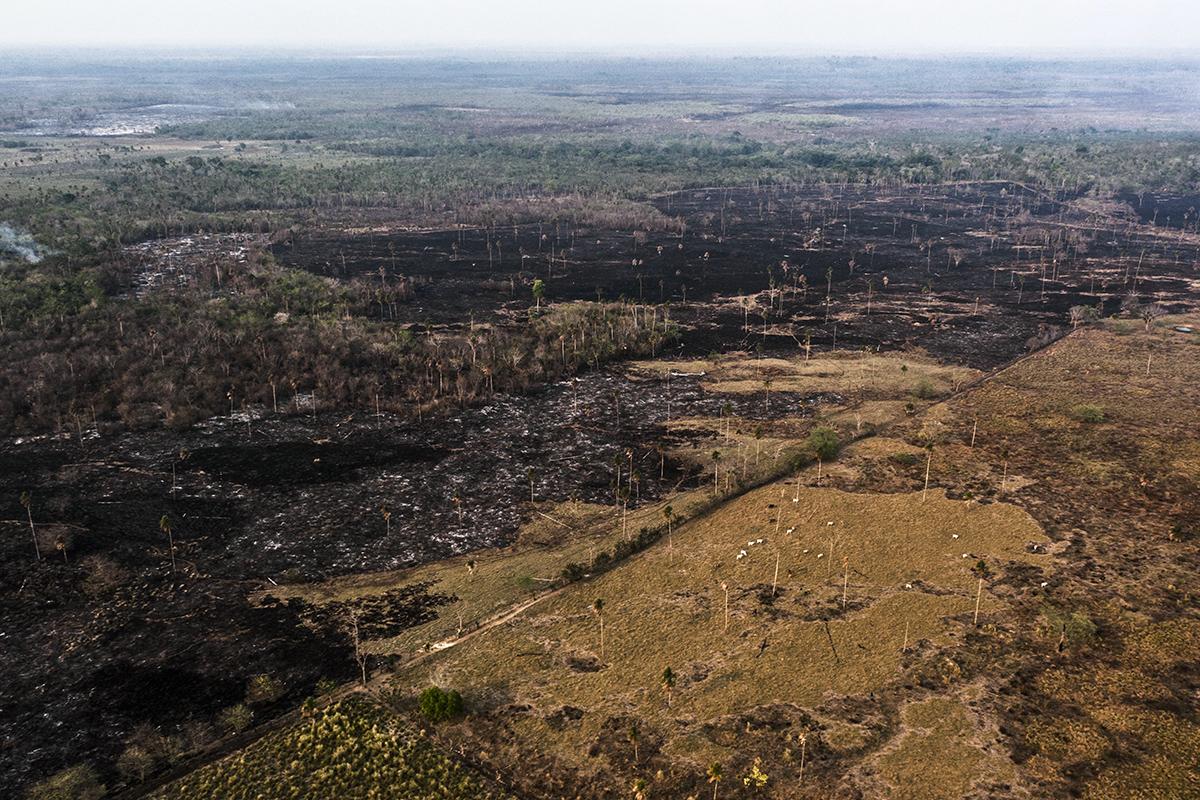 : A veces la visión desde la avioneta es desoladora, con grandes extensiones de terreno quemadas o convertidas en potreros