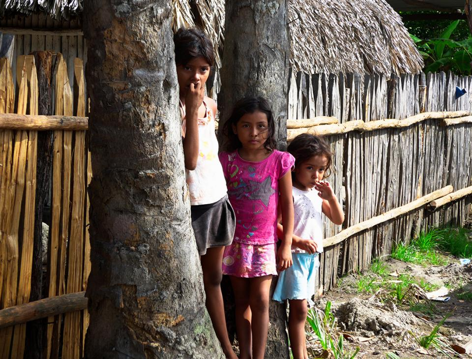 Pequeños y grandes del Manchó han tomado conciencia para la conservación del mangle para garantizar su subsistencia.