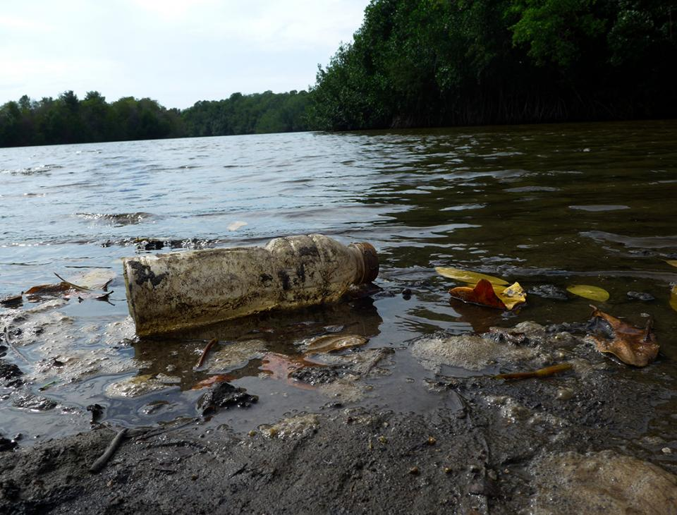 Los canales que conforman los manglares es el lugar donde desembocan los ríos, y con ellos desechos y contaminación