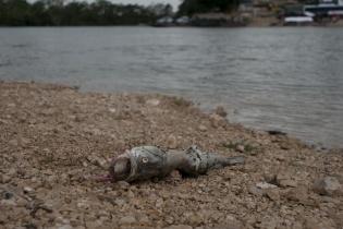 Miles de peces murieron y algunas tortugas en el río La Pasión en uno de los peores ecocidios registrados en Guatemala.