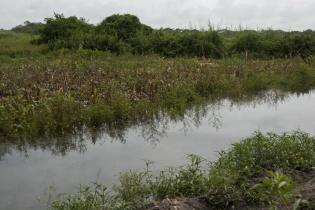 Uno de los quineles construídos por Repsa que trasladaba agua de, y para, el río, afectó la cosecha de maíz de una de las familias de la aldea El Chorro.