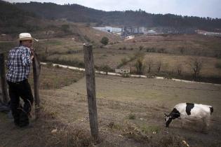 Un vecino observa su ganado pastorear frente a las instalaciones de la mina. A los comunitarios les preocupa la contaminación de los terrenos y el agotamiento de los recursos hídricos.