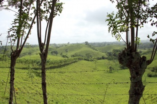 Las fincas de ganado cruzan el posible territorio indígena q'eqchi' en San Luis, Petén.