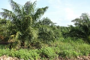 Tierras en El Naranjal propiedad de Otoniel Turcios Marroquín.