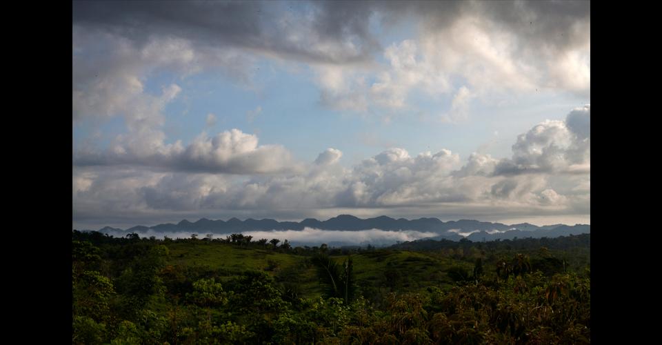 """Madrugada en """"Tierra y Libertad"""": la comunidad es rodeada por monocultivos de palma."""